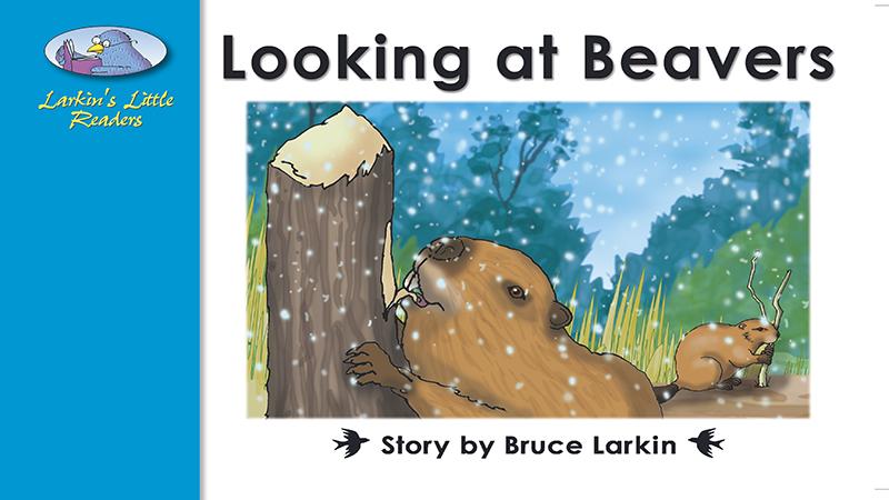 2536-EL8B Looking at Beavers_Page_01