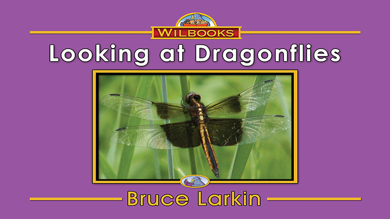 2565-FL8X Looking at Dragonflies_Page_01