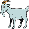Haughty-goat