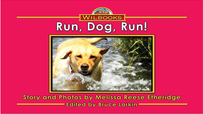 Rundog_Page_01
