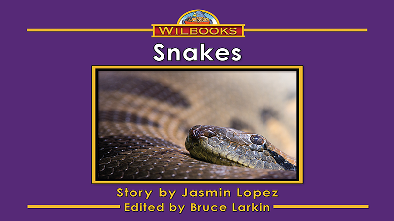 3713-XL8X Snakes_Page_01