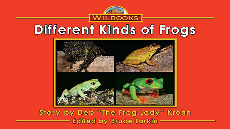 3194-XL8X Different Kinds of FrogsWEB_Page_01