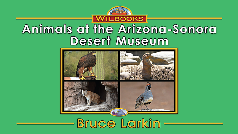 3368-XL8X Animals at the Arizona Sonora Desert MuseumWEB_Page_01